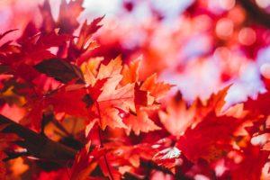 秋のデートスポットは紅葉狩りを強くオススメする理由