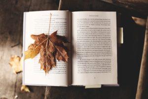 【まとめ】会話が苦手でも楽しめる!秋のデートスポット紅葉狩り